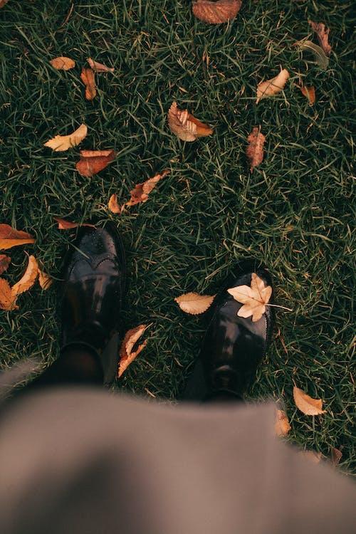 Foto d'estoc gratuïta de botes, calçat, fulles, herba