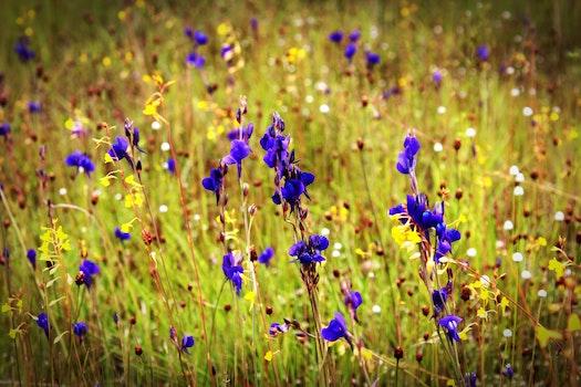 Purple Flower Closeup Photography