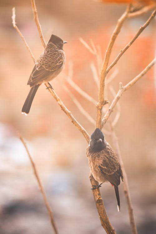 Two Brown Birds Perched on Branch