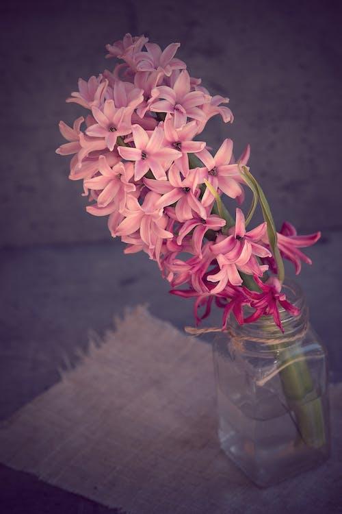Immagine gratuita di bocciolo, fiori, flora