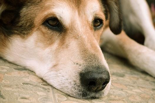 Black and Tan Short Coat Medium Size Dog Lying on Floor