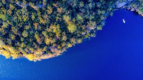 Foto d'estoc gratuïta de aigua, arbres, barca, blau