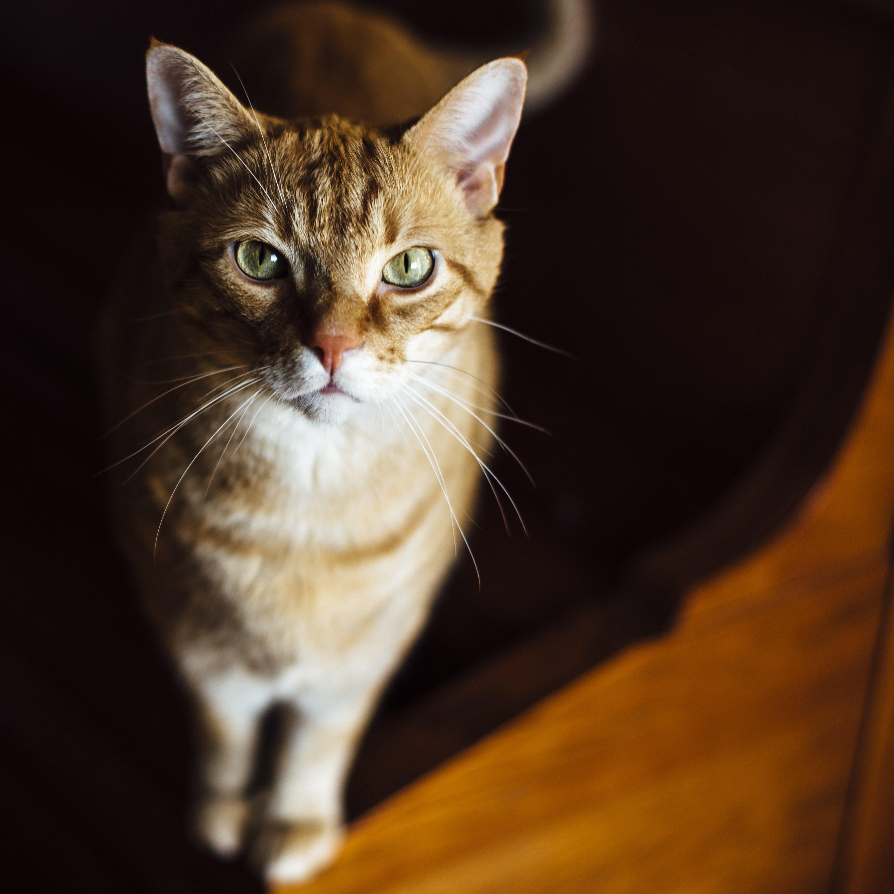 bulanık, bulanıklık, çok sevimli, Evcil Hayvan içeren Ücretsiz stok fotoğraf