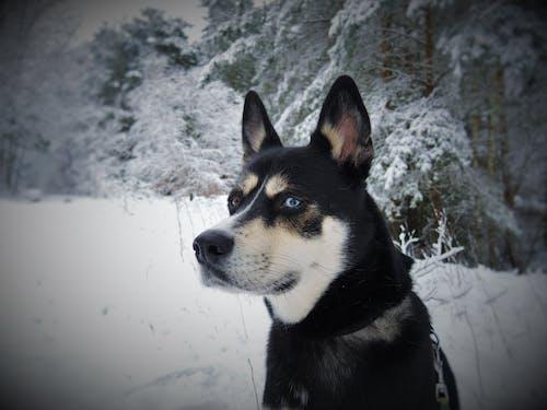 Foto stok gratis anjing, binatang, dingin, hewan peliharaan
