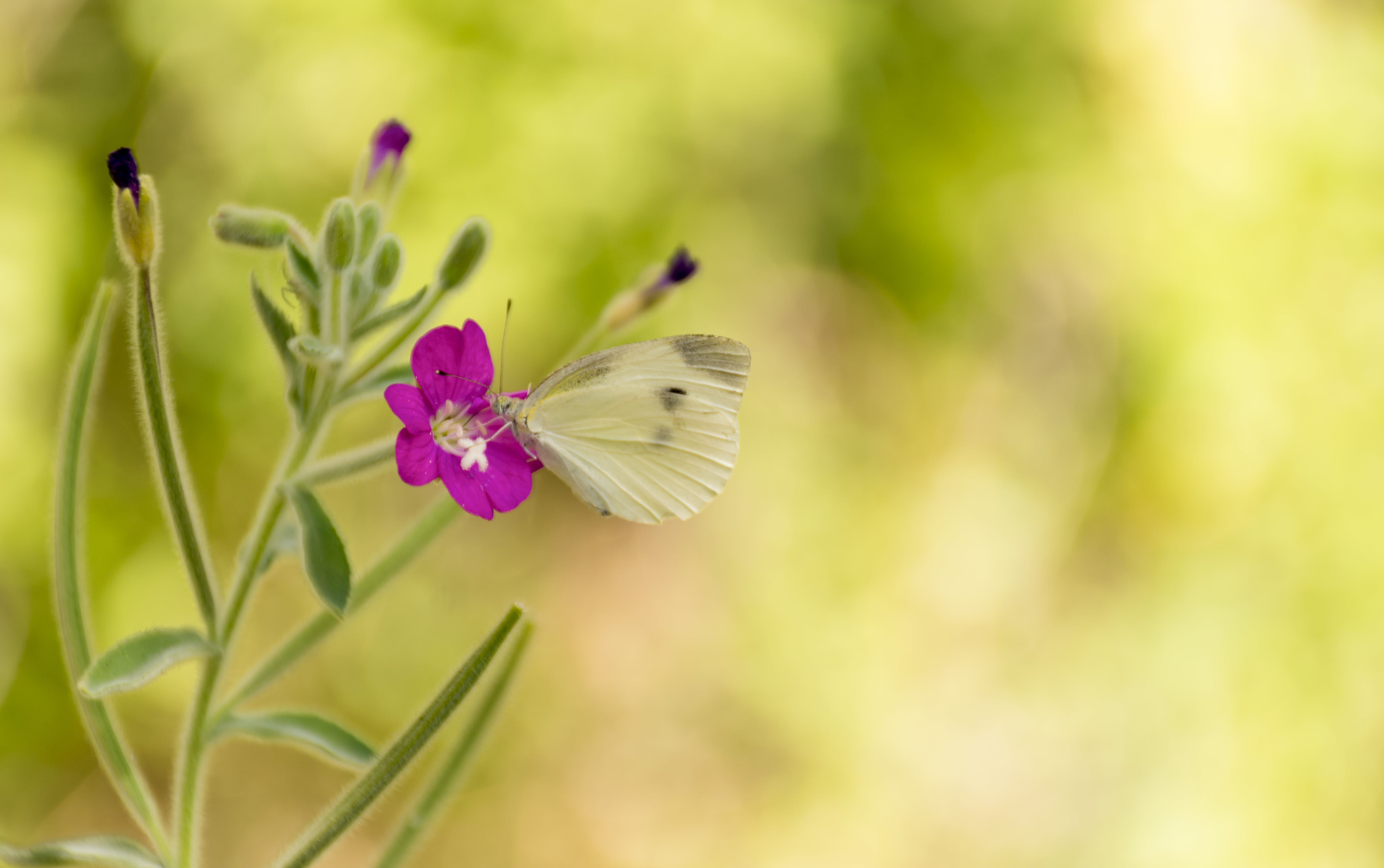 Butterfly On Top Of Pink Flower