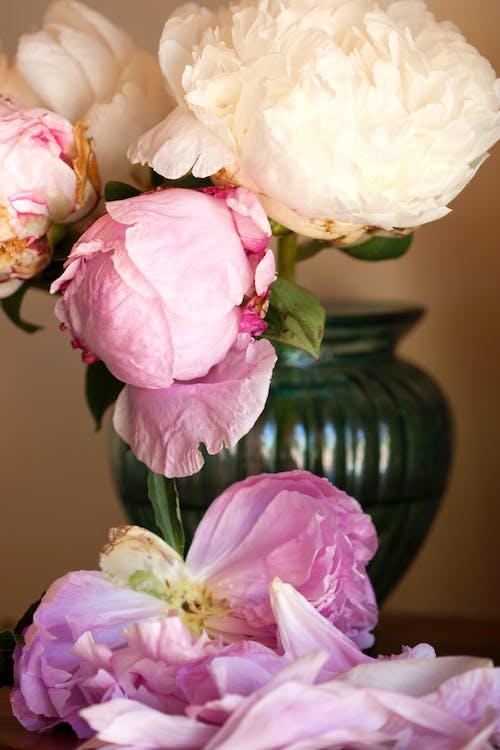 Foto profissional grátis de arranjo de flores, broto, buquê, cores