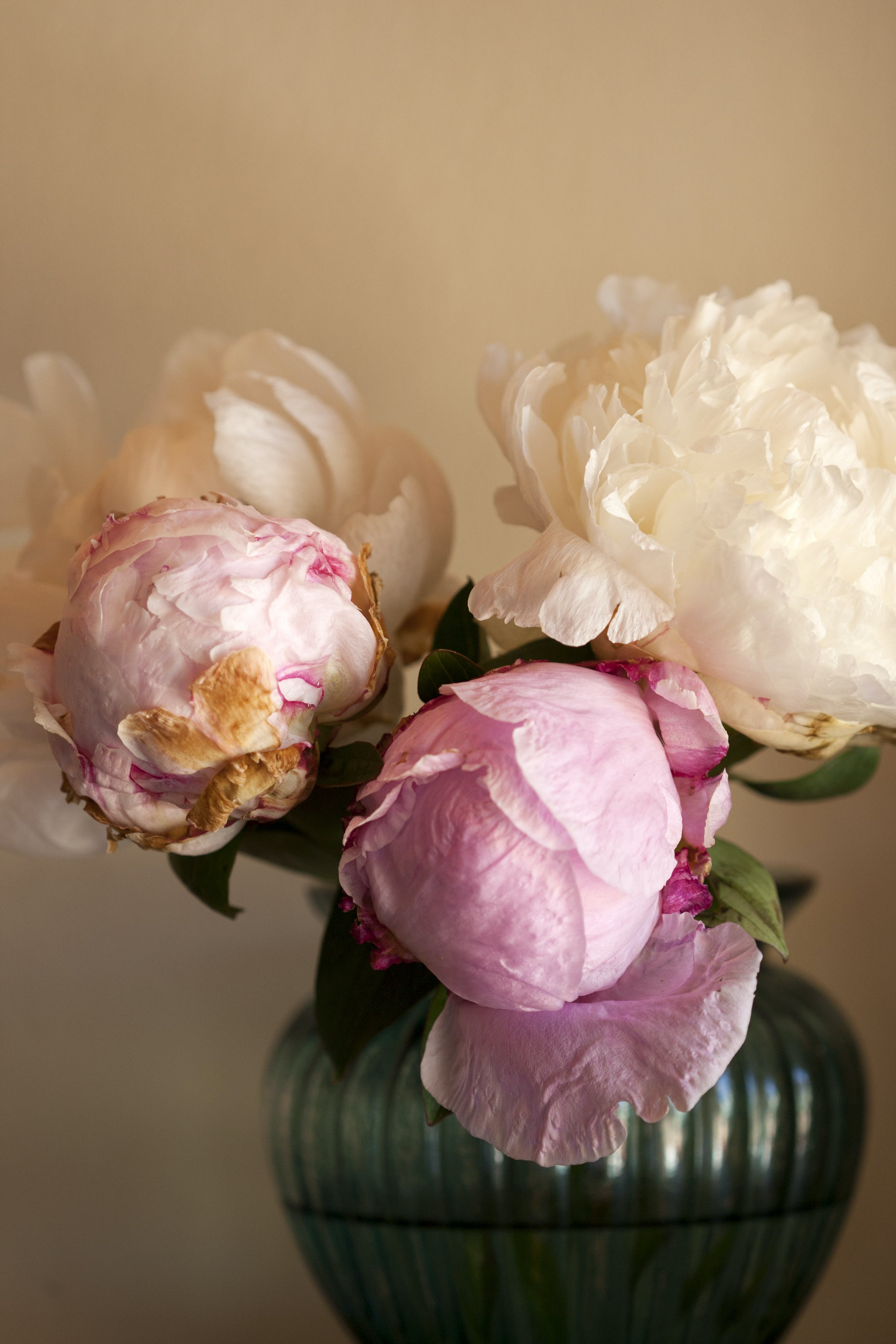 White And Pink Peony Flower