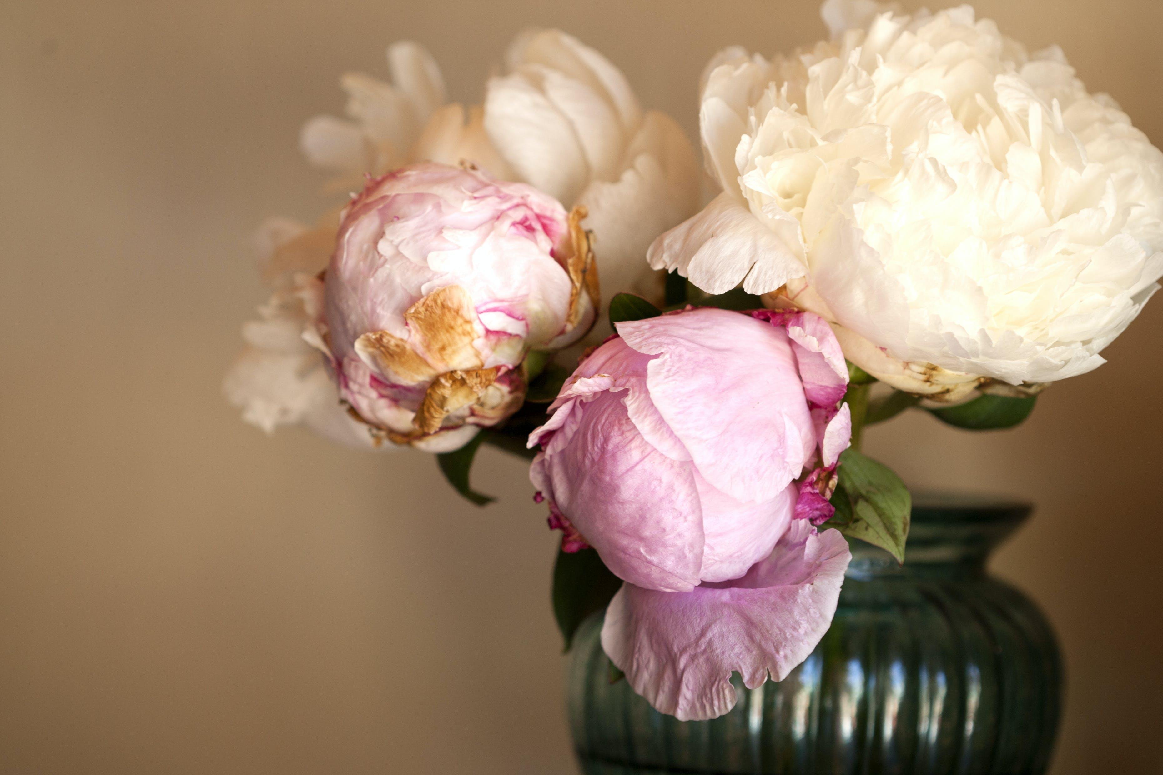 Kostenloses Stock Foto zu blühen, blumen, blumengesteck, blumenstrauß