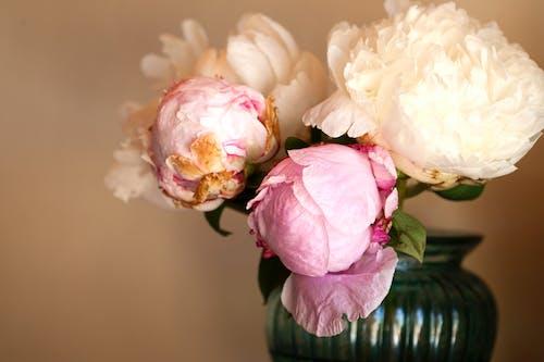 微妙, 愛, 插花, 明亮 的 免费素材照片