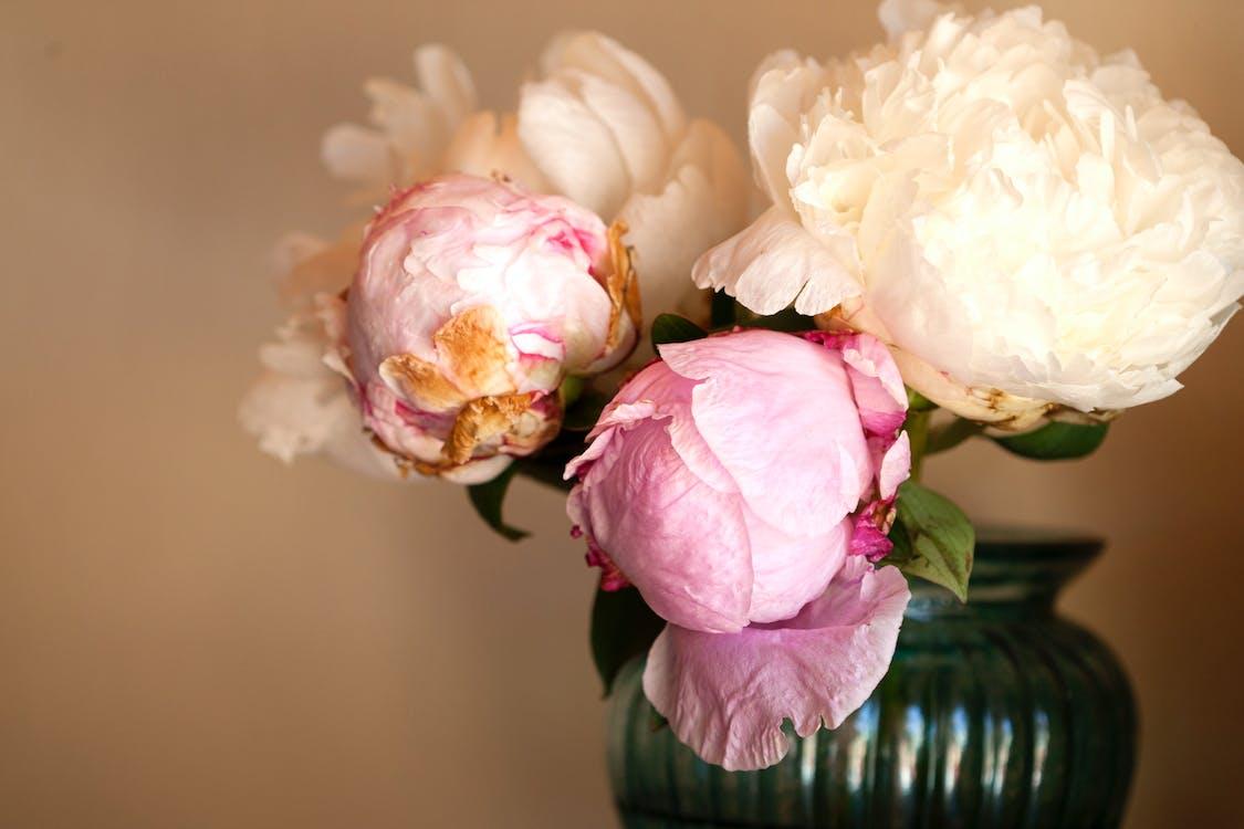 꽃, 꽃꽂이, 꽃병