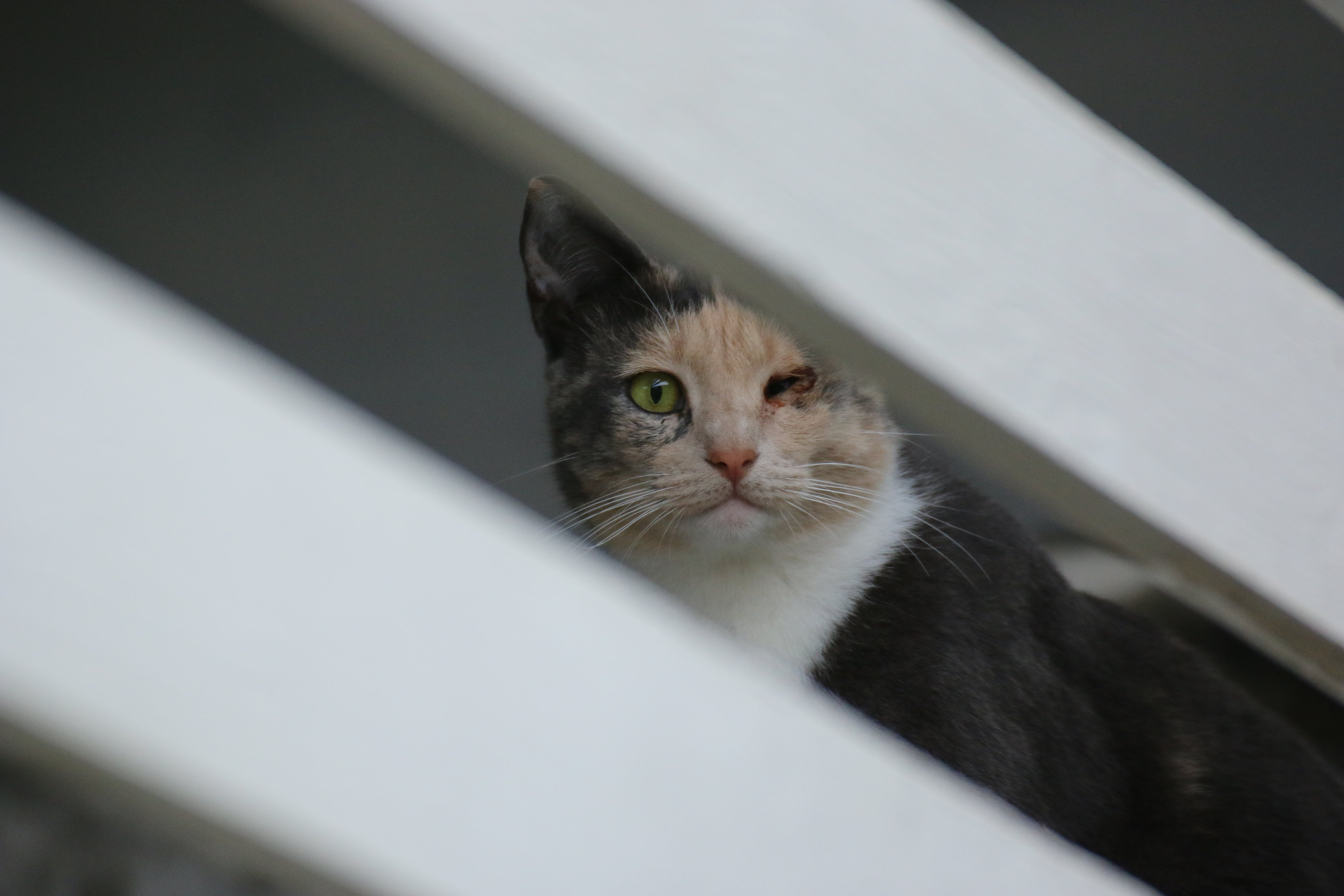 cat, feline, hiding