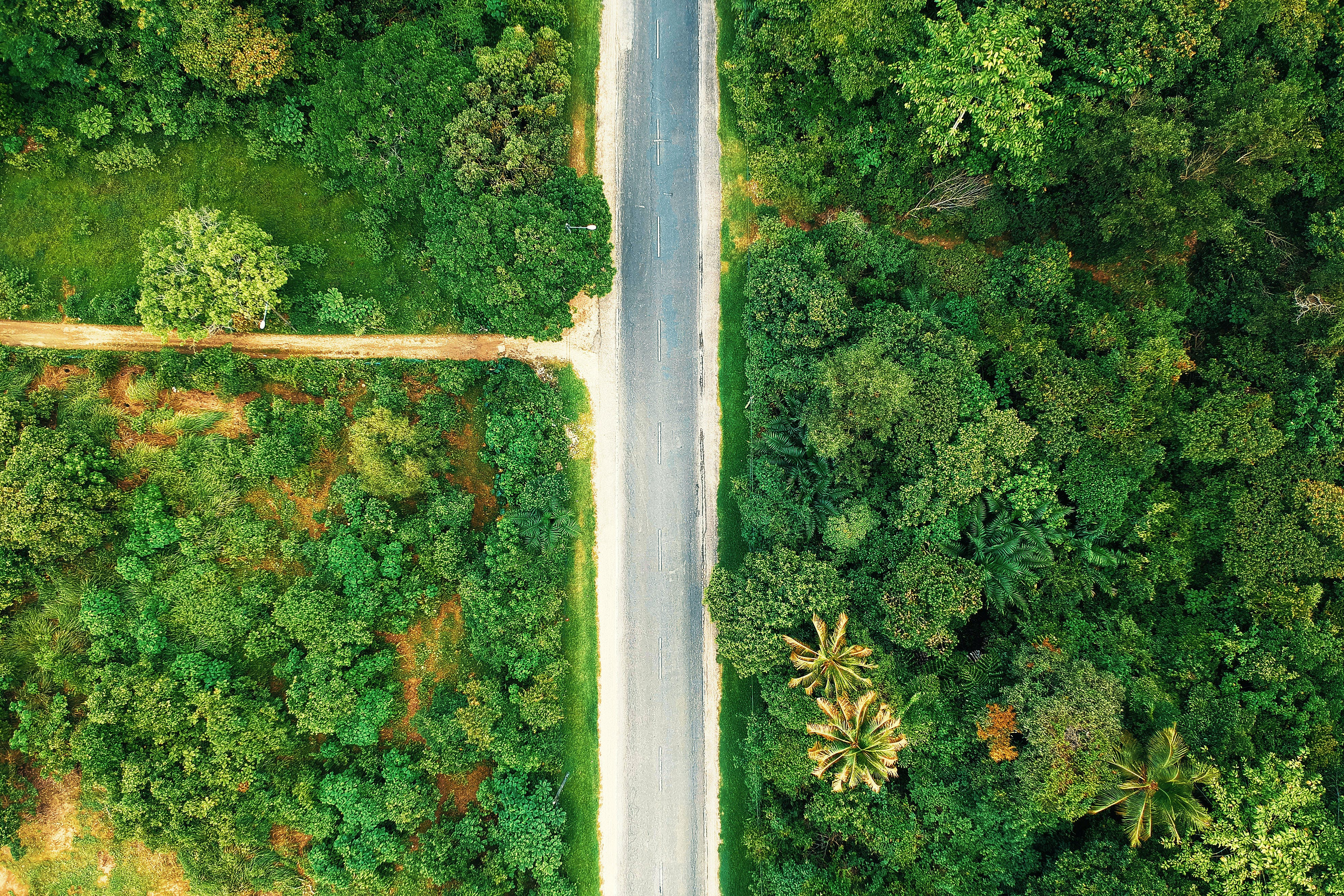 Bird's-eye View Photography of Road Between Trees
