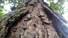 texture, tree, tree trunk