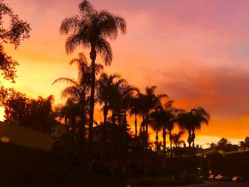 Free stock photo of orange skies, sunset