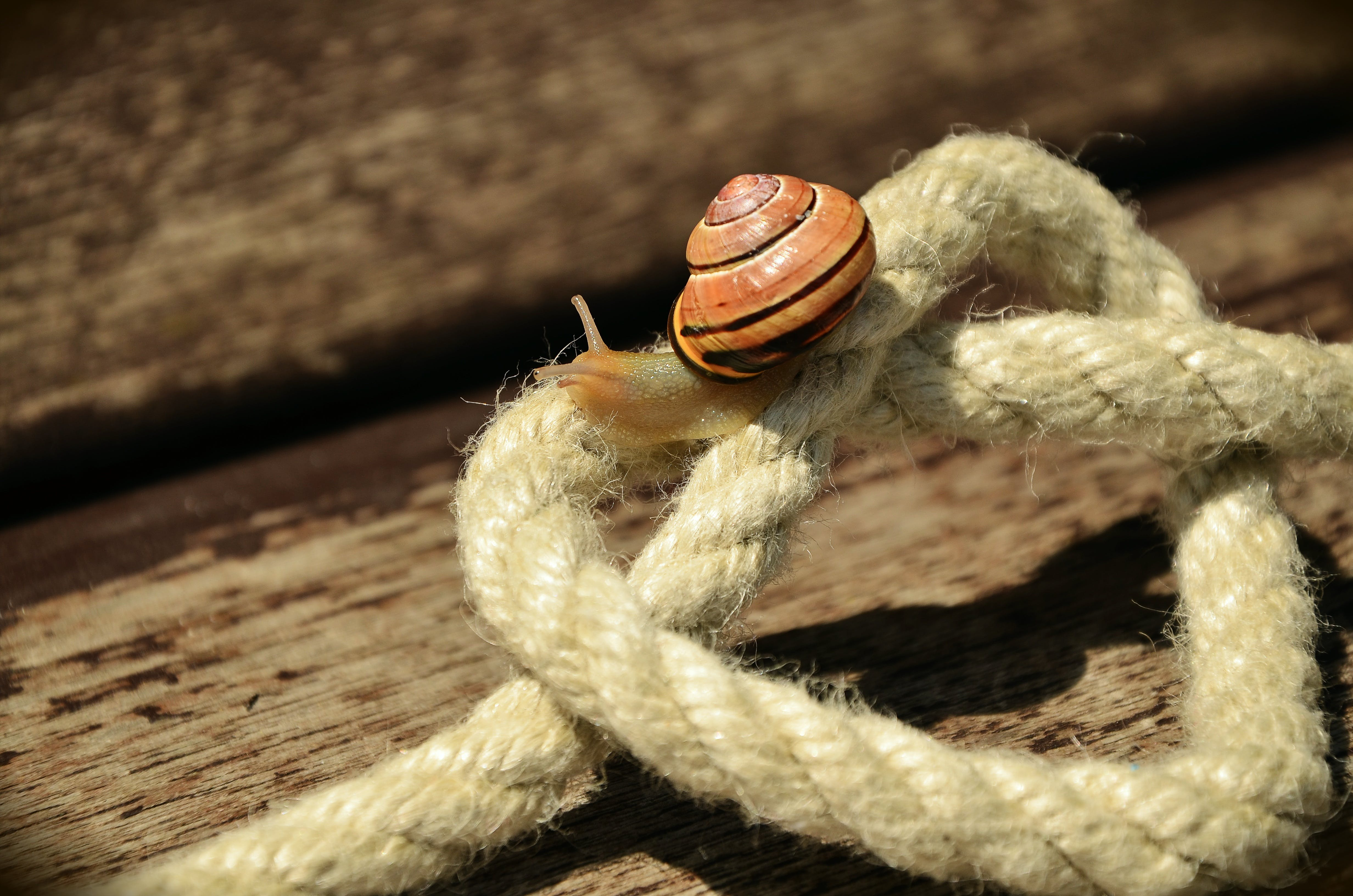Snail on White Square Knot Rope