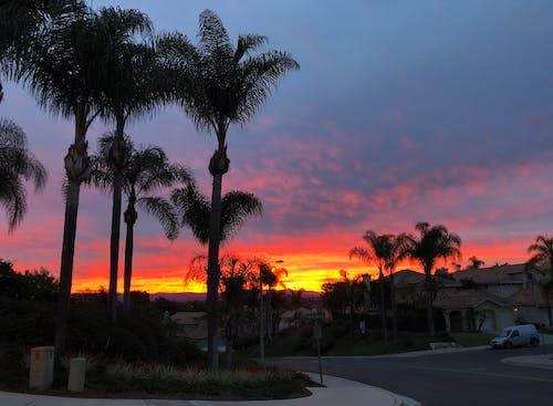 Free stock photo of skies, sunrise