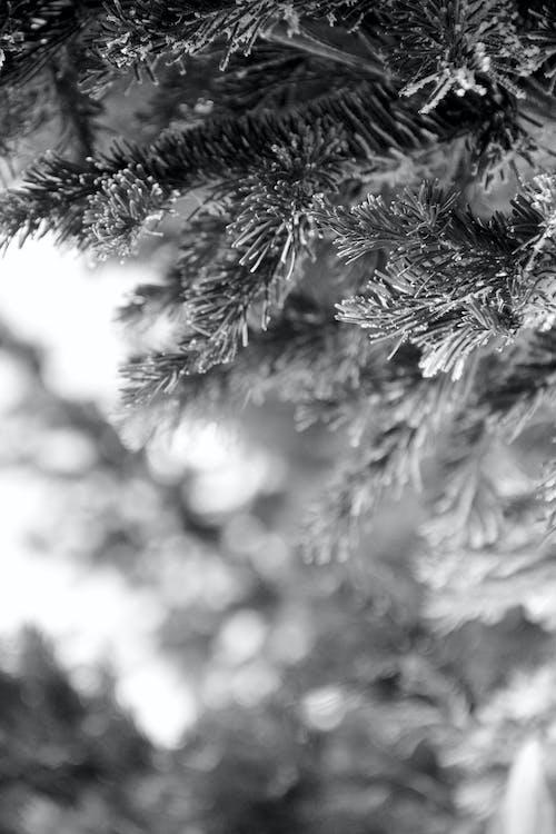 Foto d'estoc gratuïta de arbres, blanc i negre