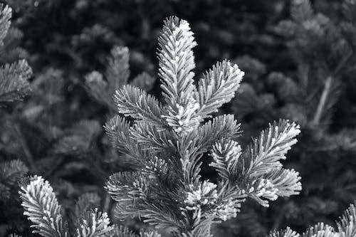 樹木, 黑與白 的 免费素材照片
