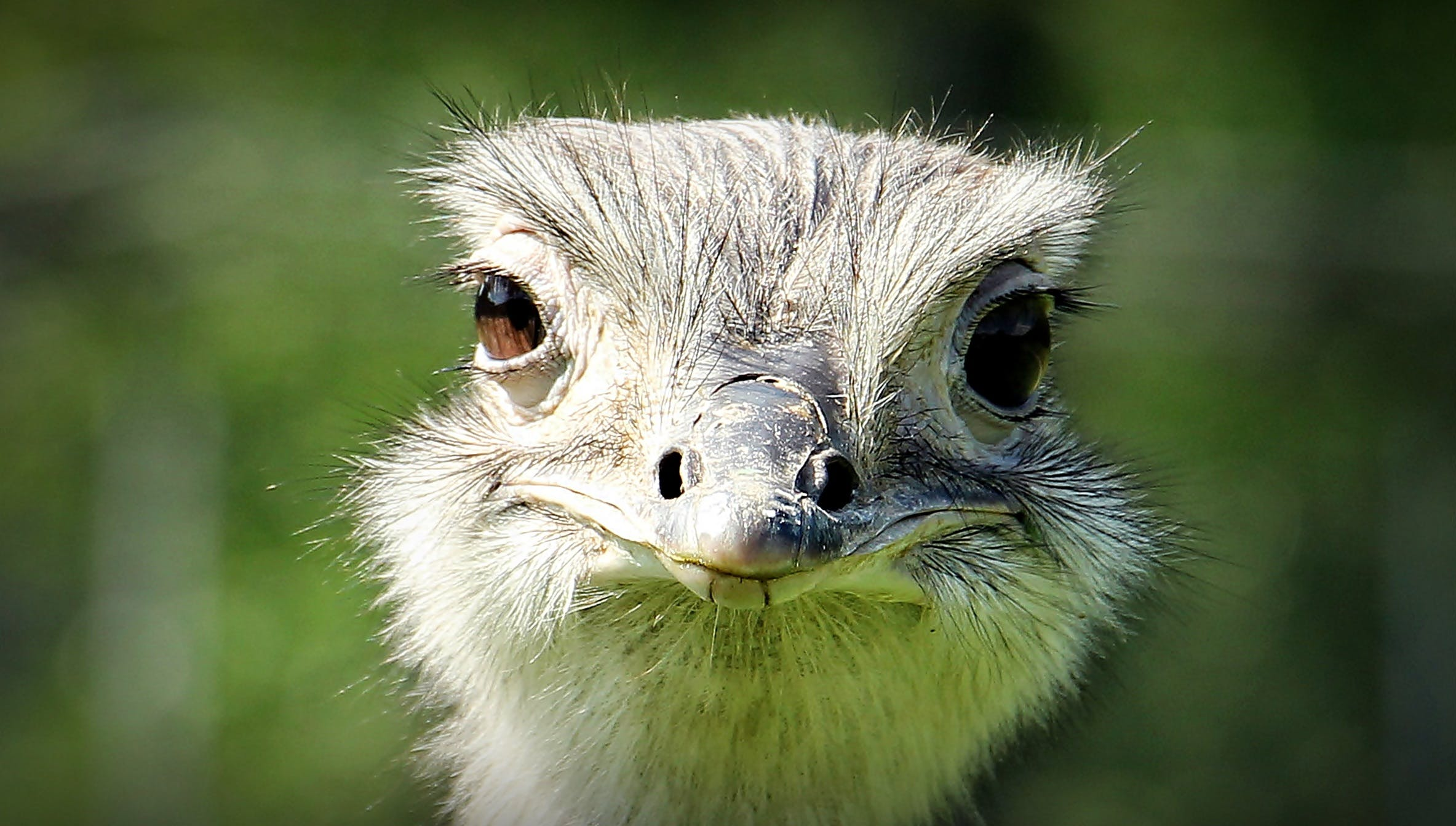 Ostrich Face during Daytime
