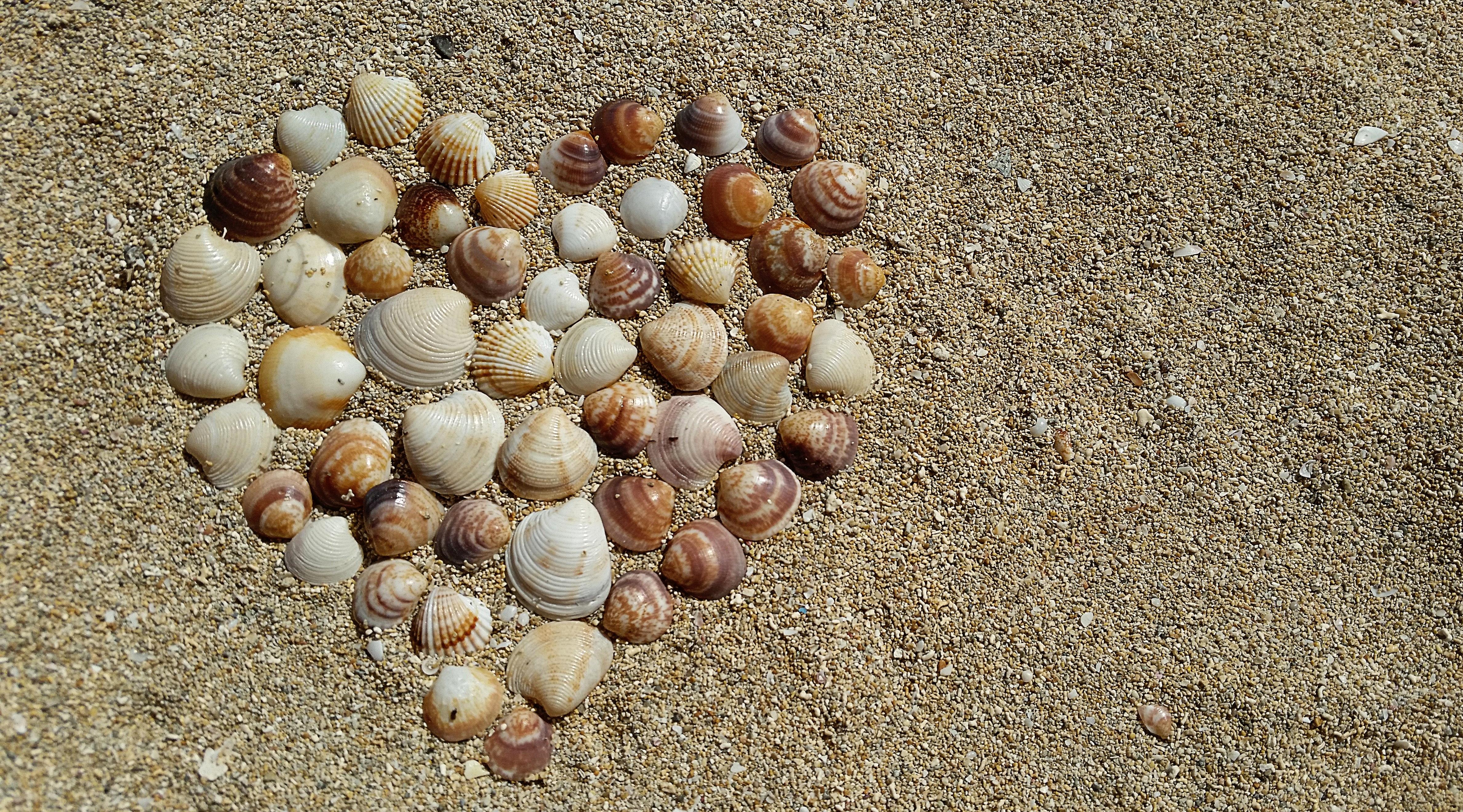 Heart Shape Sea Shells On Brown Beach Sand Free Stock Photo