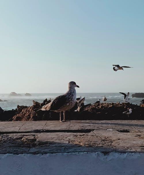 カモメ, サーフィン, ビーチ, フライトの無料の写真素材