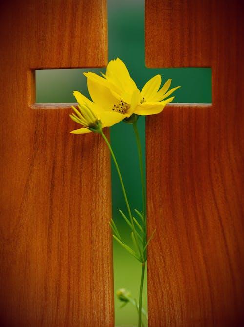 Immagine gratuita di bocciolo, cristianesimo, croce, fede