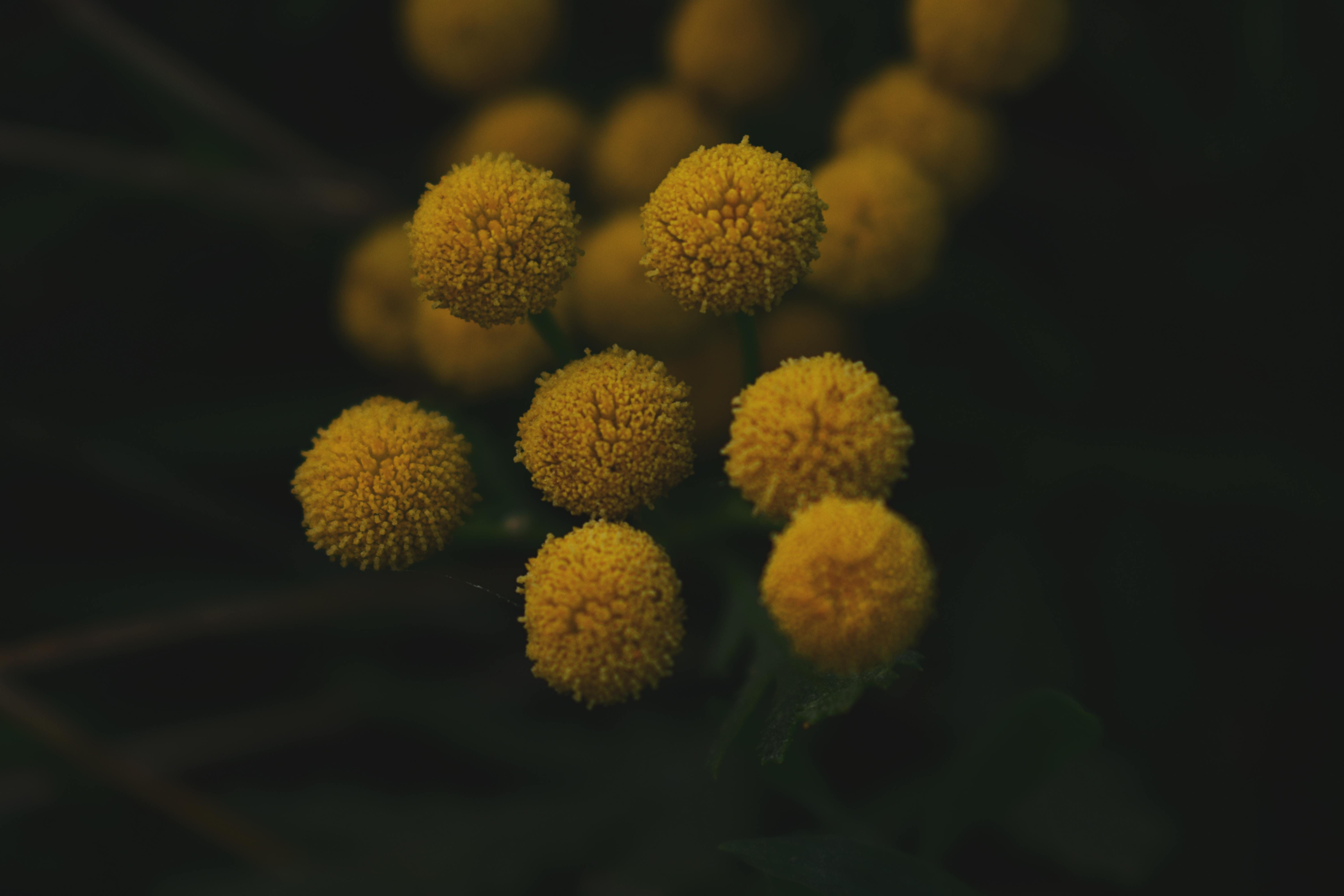 Selective Focus Photo of Yellow Petaled Flower