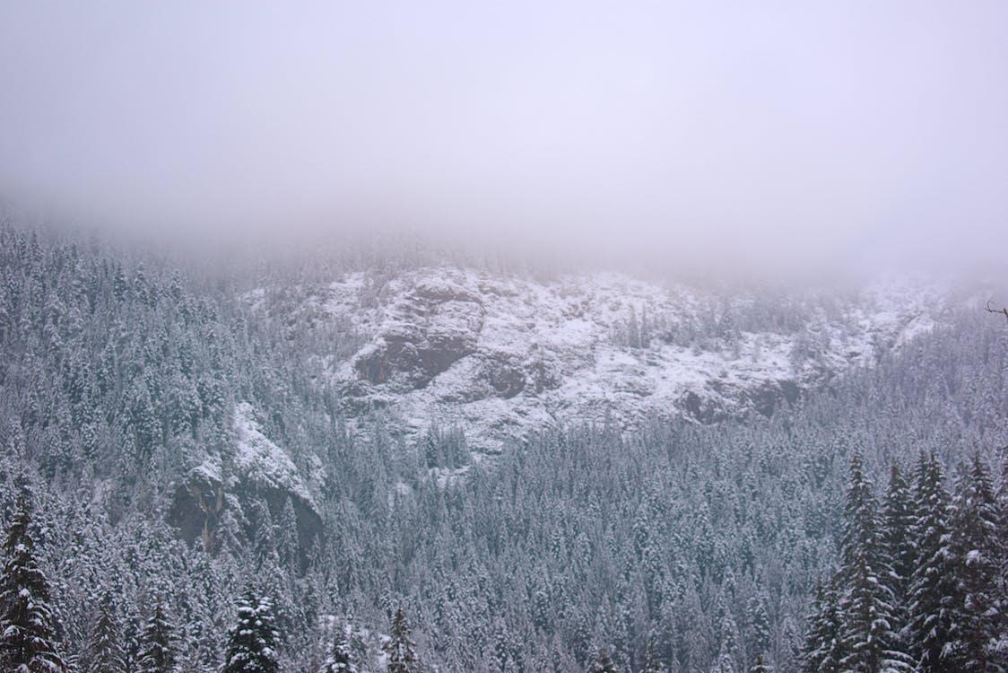 arboles, bosque, con niebla
