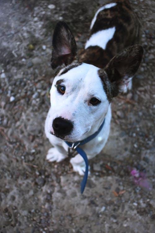 Fotos de stock gratuitas de adorable, animal, canino, de pura raza