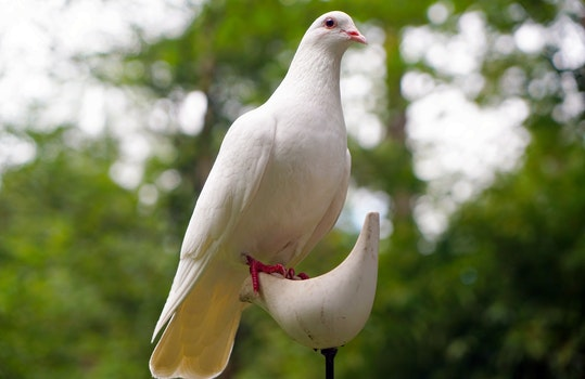 White Dove on White Bird Figure Stand