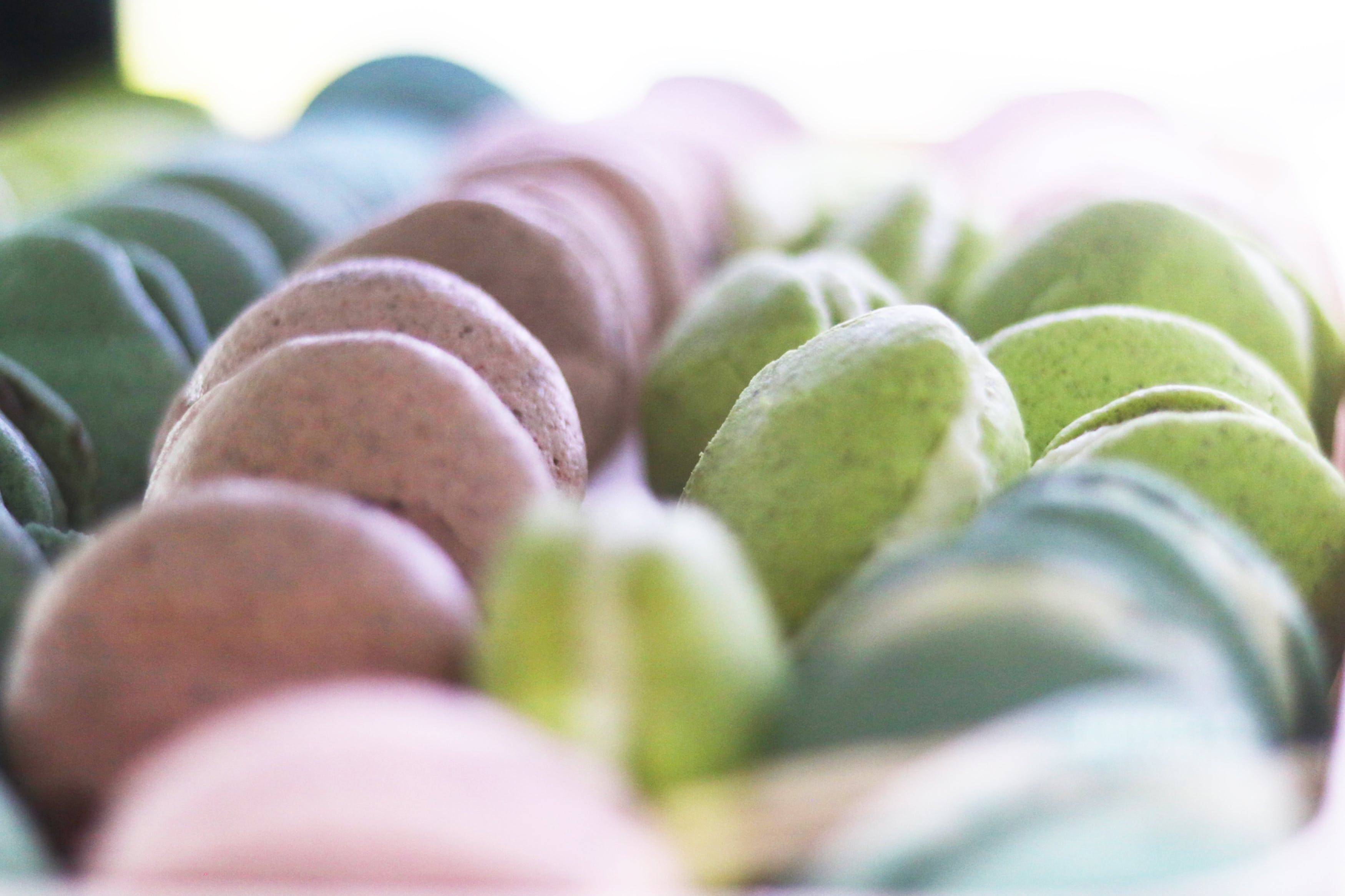 Kostenloses Stock Foto zu bunt, cookies, cremig, makrone