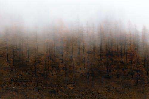 Gratis stockfoto met bomen, Bos, bossen, bureaublad achtergronden