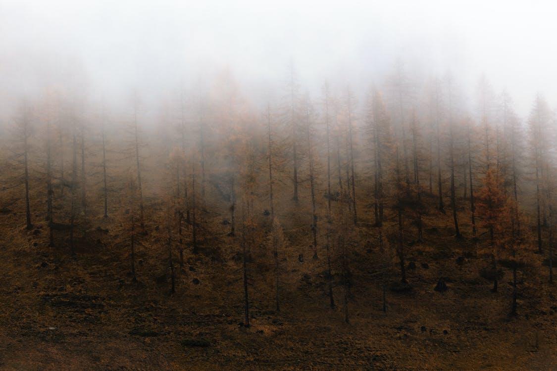 ต้นไม้, ป่า, พื้นหลังเดสก์ทอป
