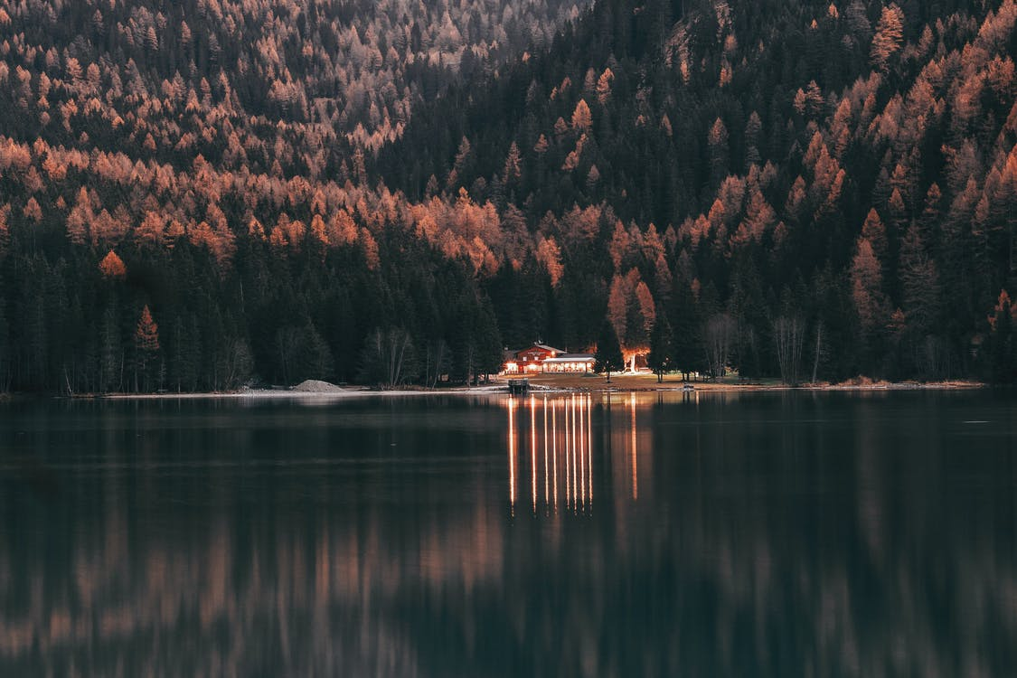 árvores, beira do lago, beira-lago