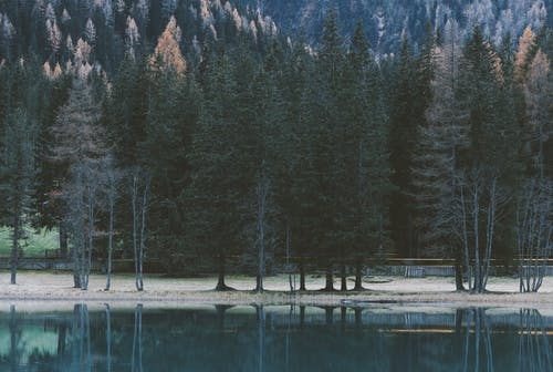 Low-light Photography of Calm Body of Water Near Trees