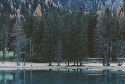 Fotobanka sbezplatnými fotkami na tému denné svetlo, ihličnan, ihličnatý strom, krajina