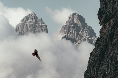 Brown Bird Flying Near Mountain