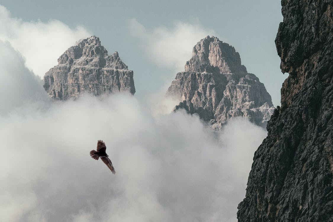 aigle, aventure, brouillard