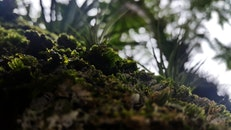 grass, moss, leaves