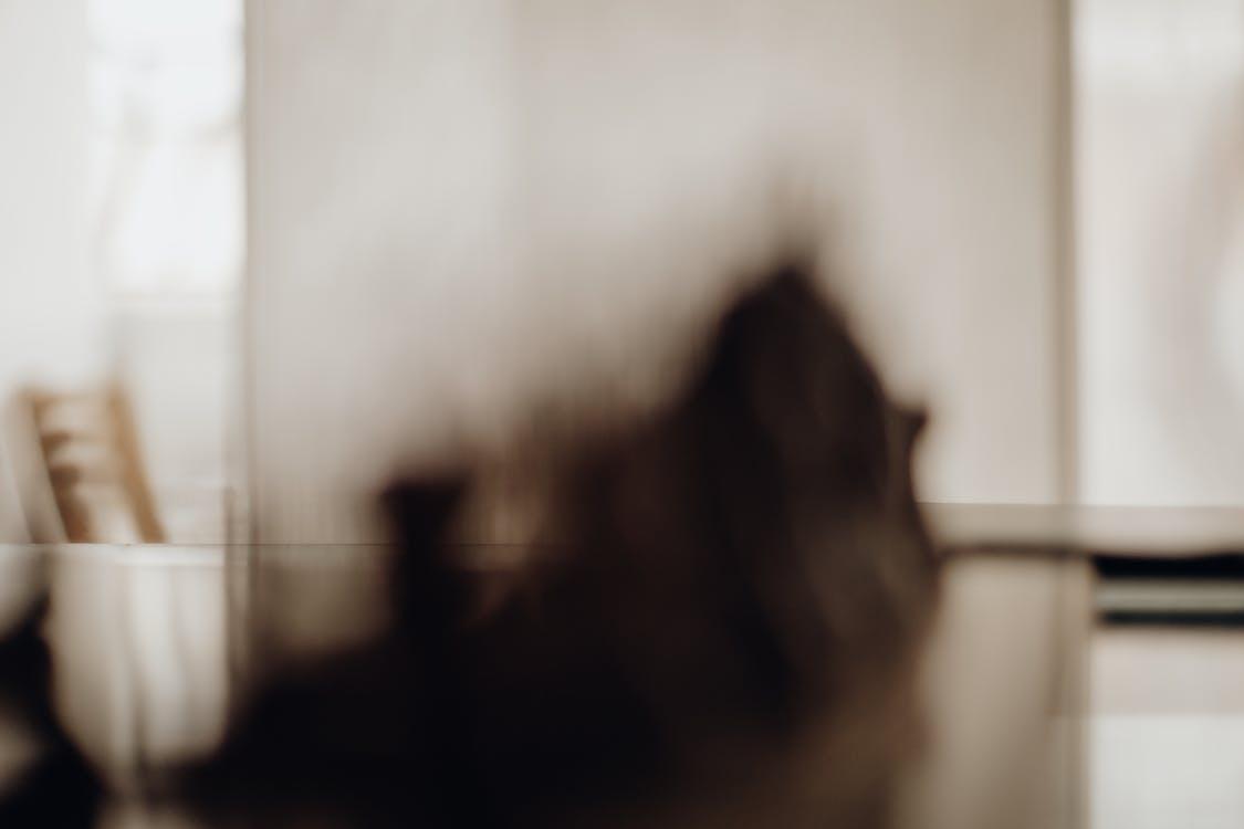 blur, blurred, blurred background