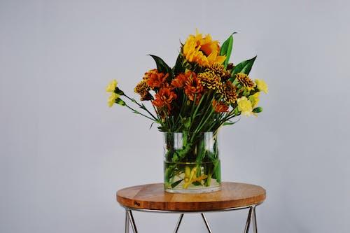 Gratis arkivbilde med blomster, blomsterarrangement, blomsterblad, farger