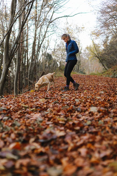 Adult Yellow Labrador Retriever and Woman Walking in Forest Trail