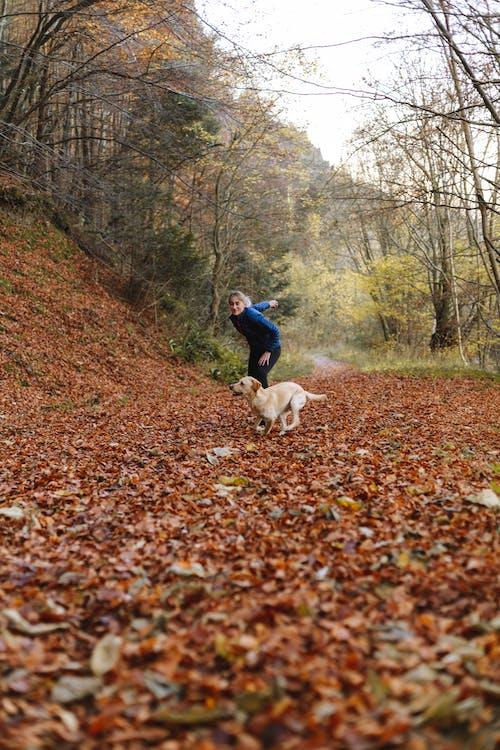 Fotos de stock gratuitas de animal, arboles, bosque, césped
