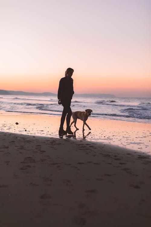 Základová fotografie zdarma na téma cestování, domácí mazlíček, dospělý, krajina