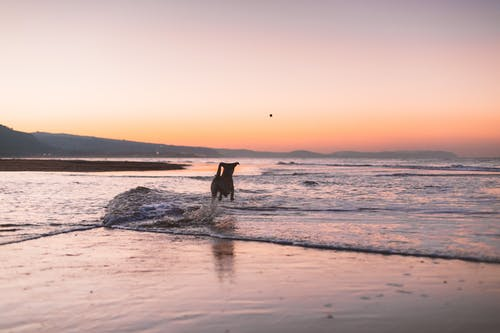 Silhouette Photography of Dog Running on Shore