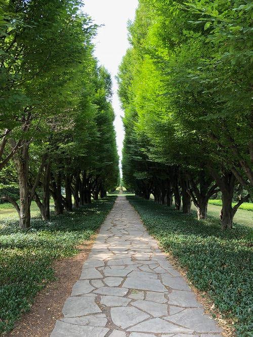 Free stock photo of botanical gardens, niagara