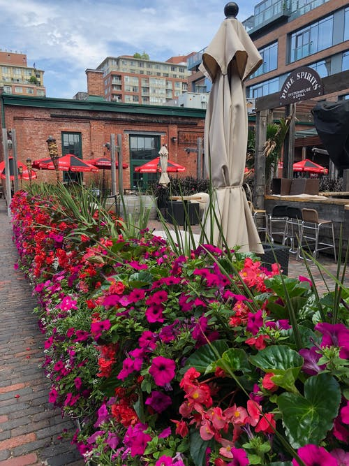 Free stock photo of Distillery District, Toronto