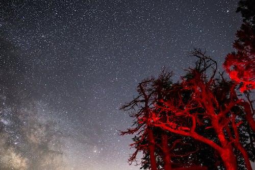 Foto d'estoc gratuïta de a l'aire lliure, arbres, art, astronomia