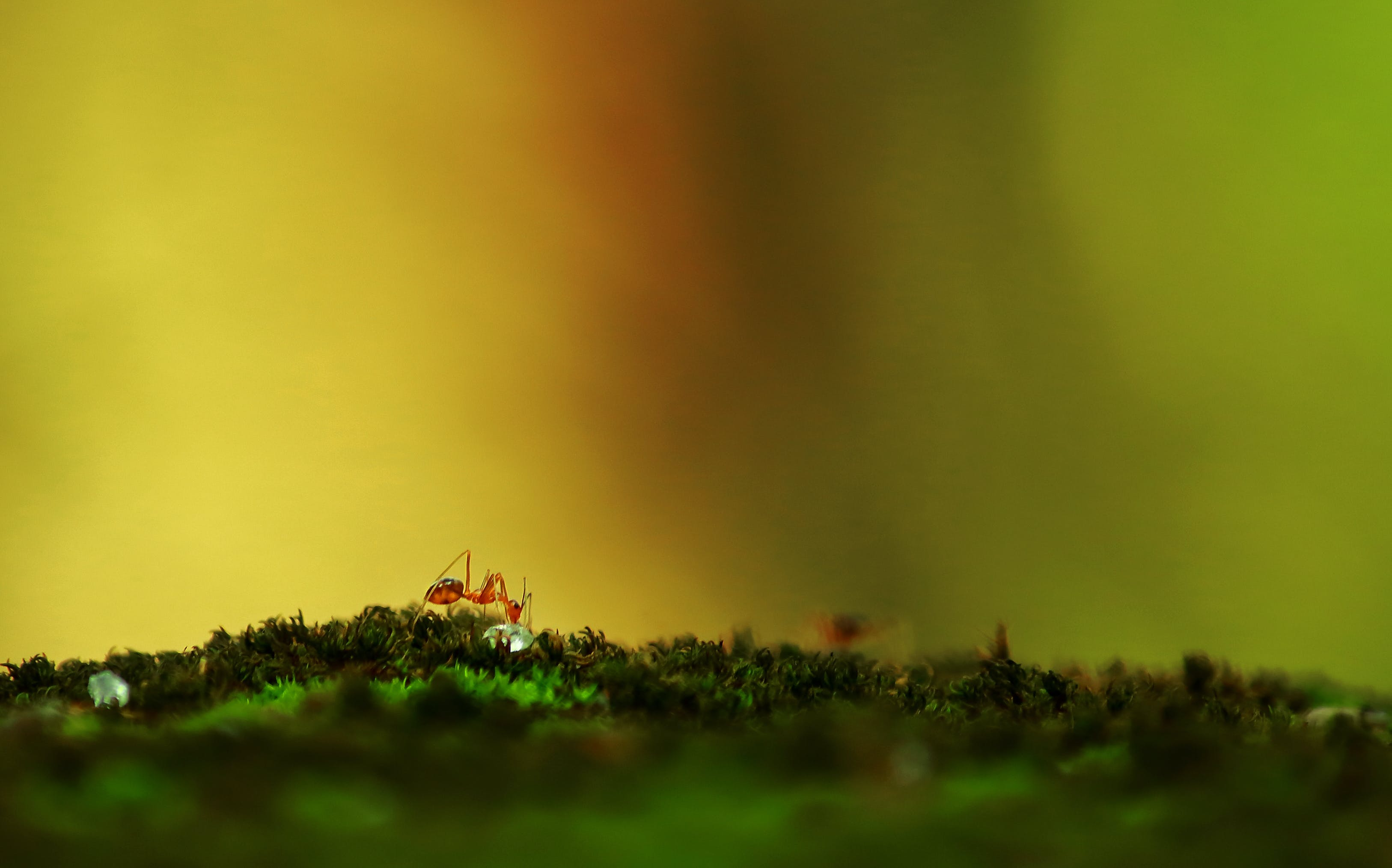 Selective Focus Photography Of Red Ant On Green Surface