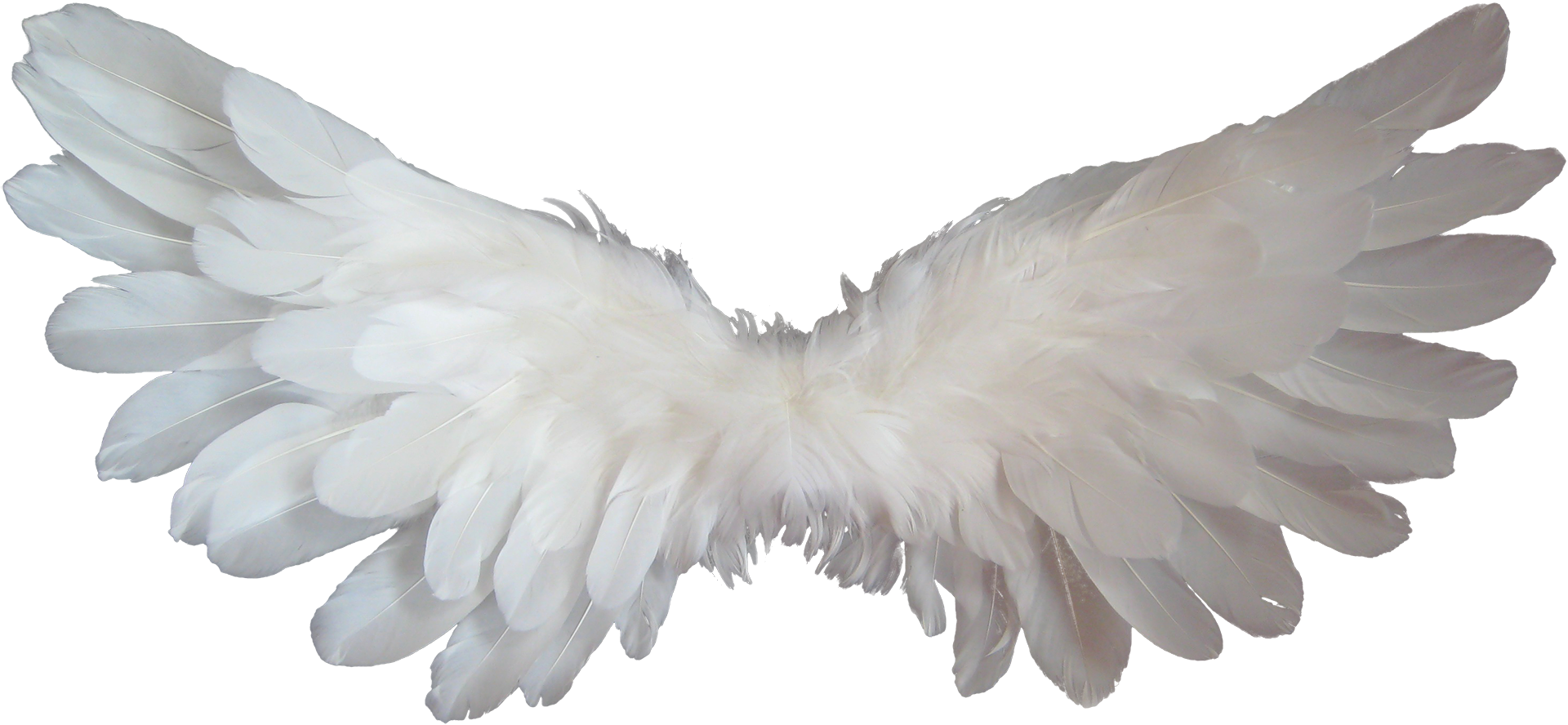 Free Stock Photo Of Angel Angel Wings Angelic